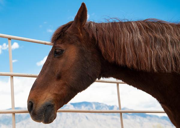Carlos the Horse