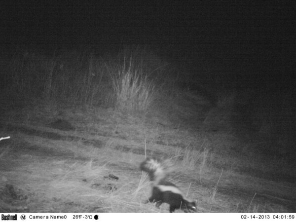 Trailcam NBR  Feb 2013