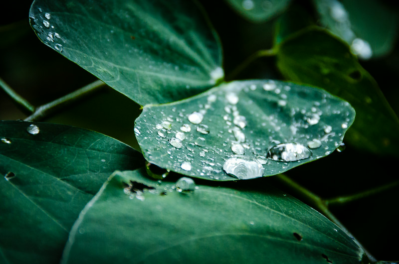 Walking on Leaf