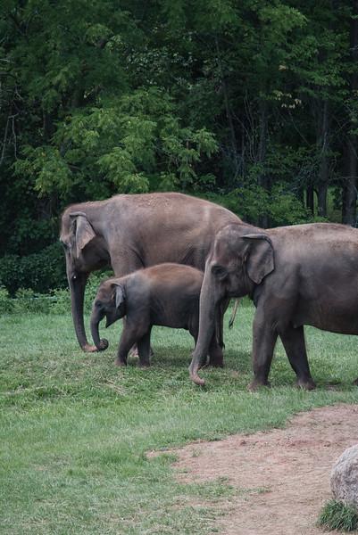 Syracuse Zoo August 2020-9.jpg