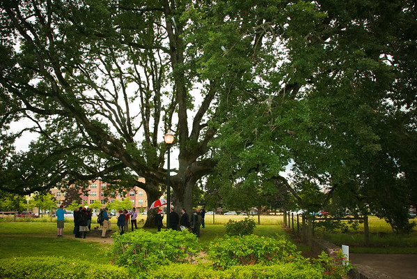 City of Hillsboro Oak Tree Meeting