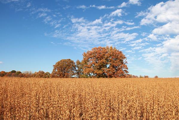 Fredericksburg/Fall
