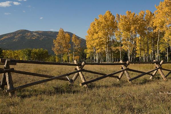 Colorado Fall Colors - 2008