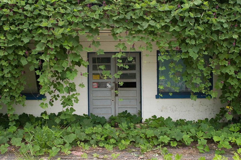 Entrance to kudzu covered building in Gainesville, Ga.