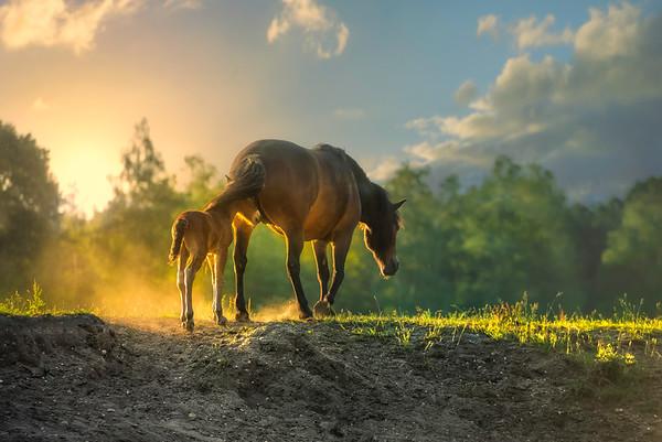 Fine Art natuur foto van een wild paard met veulentje er vlak achter lopend bedekt onder de staart.