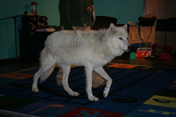 Wolf visit