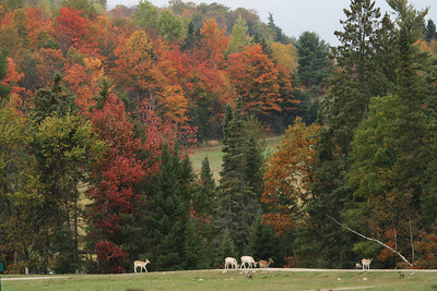 AUTUMN  SPLENDOUR  IN  PARC  OMEGA