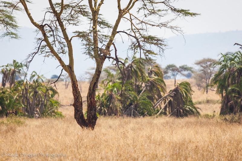 South_Serengeti-37.jpg