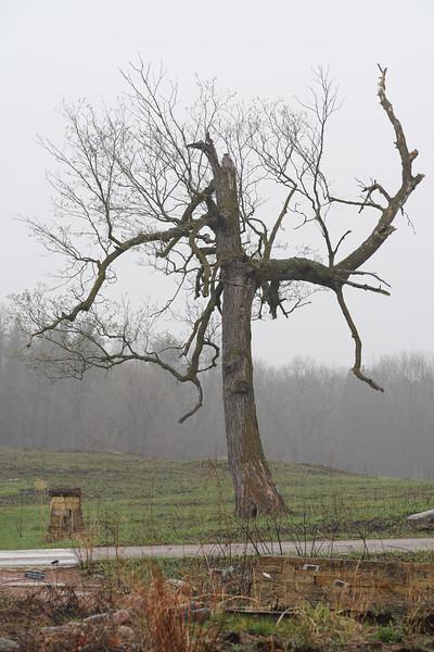 Tree Arboretum.JPG
