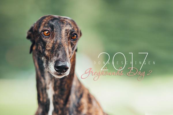 Donaueschingen-Greyhounds 13/08/17