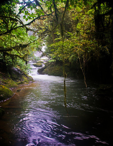 River pathway CR.jpg