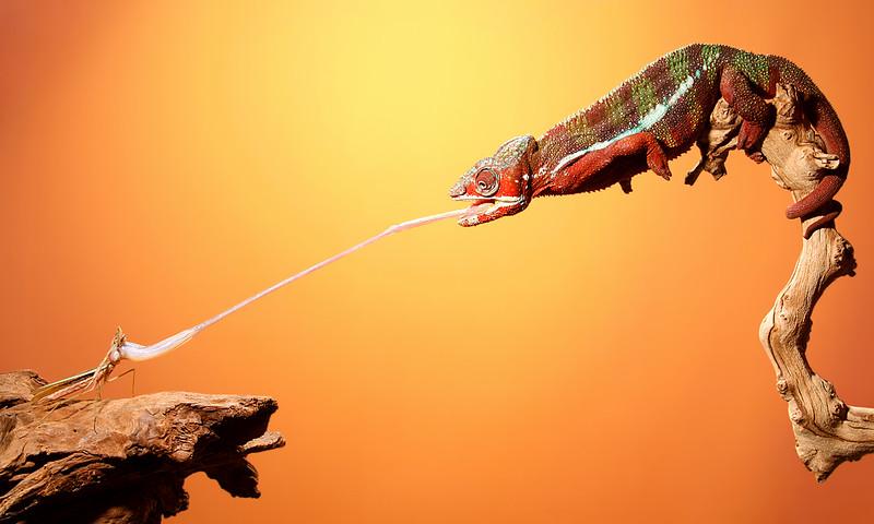 Dexter Snatches Mantis.jpg