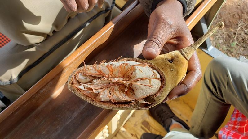 Tanzania-Tarangire-National-Park-Safari-Baobao-Fruit-03.jpg