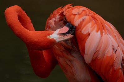 2021 01 Nashville Zoo