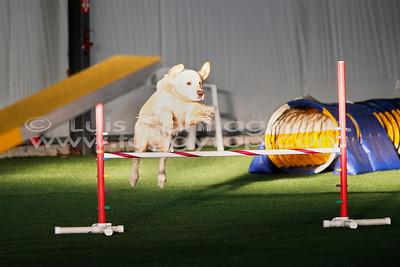 SAT 12 January 2019 3D Dog