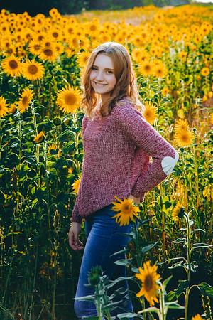 Sunflowers Bodin