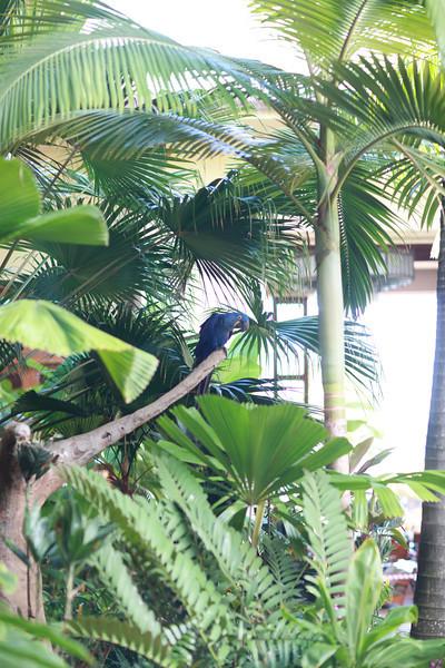 Kauai_D5_AM 218.jpg