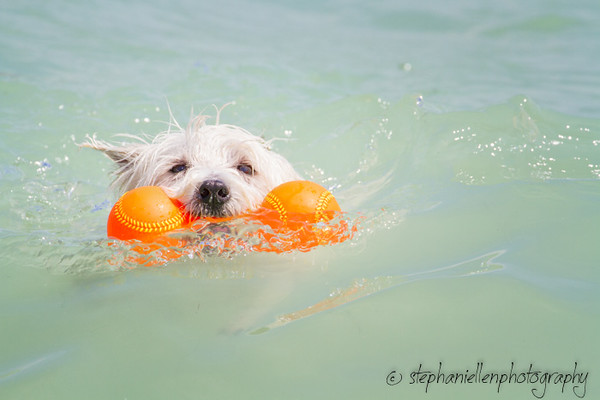 20140427dog_beach_fort_desoto_Tampa_Stephaniellenphotography.com-_MG_0513-Edit.jpg
