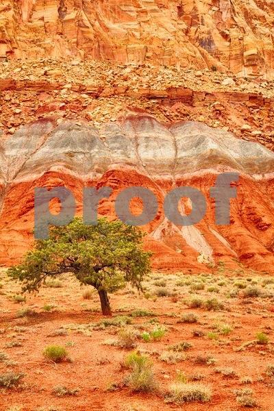Capitol Reef, tree, rocks 6901_HDR.jpg