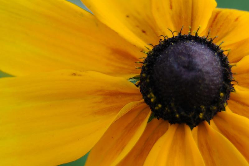 flowers_20080714-027.jpg