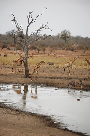 Kruger - Day 12 - Oct 24