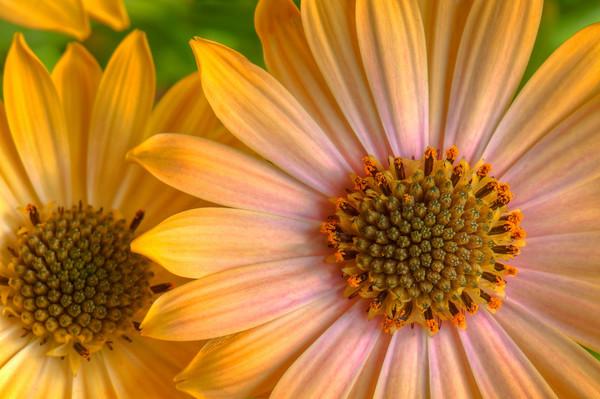 Rick Haley - Close Up Color