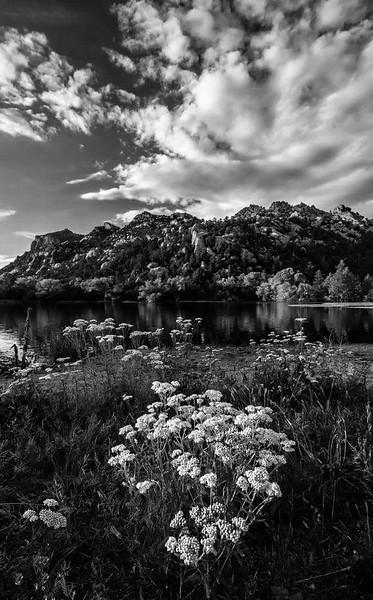 Yarrow Flowers at Granite Basin lake