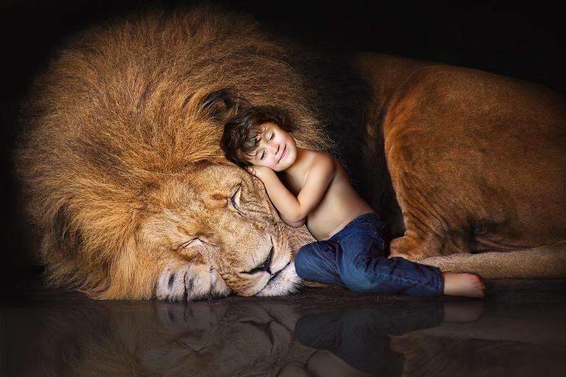 lion-1812316b.jpg