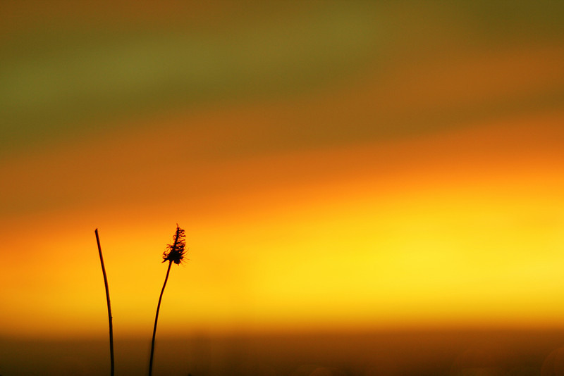 Weeds against the sunset from Fairmont Ridge.