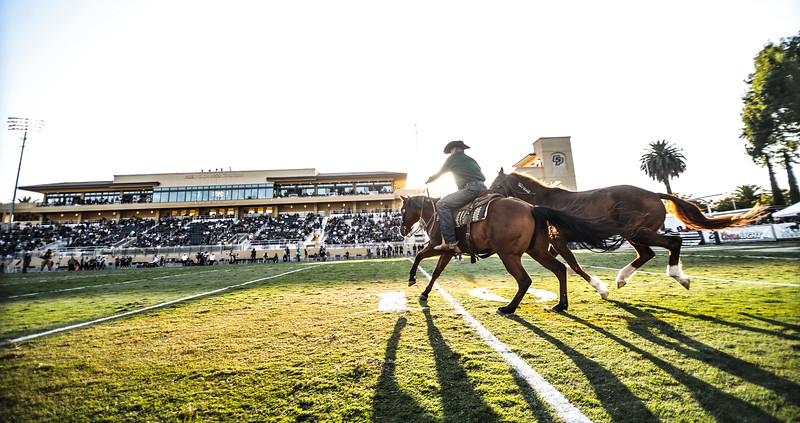 Cal Poly Football takes on Portland State. The Mustangs won 42-14.  Sep. 20, 2014. Photo by Ian Billings