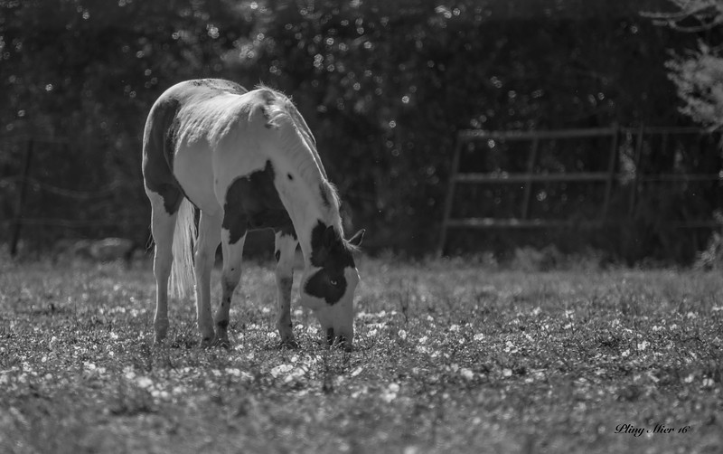 B&W horse 2 TR_DWL8211-2.jpg