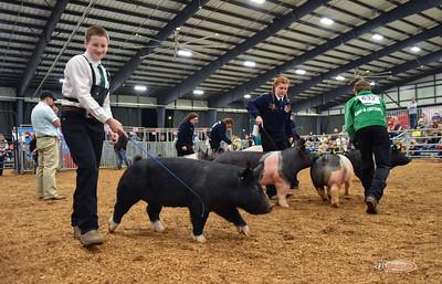3/12/21 Judging and Pig Showmanship