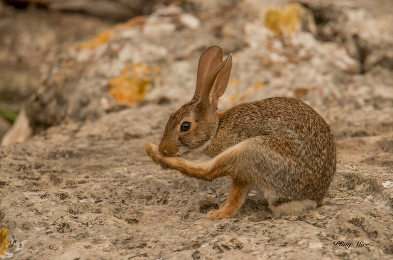 Bunny_DWL2337.jpg