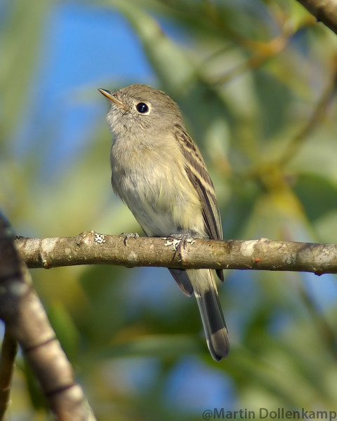 grayishyellowsmallbird2.jpg