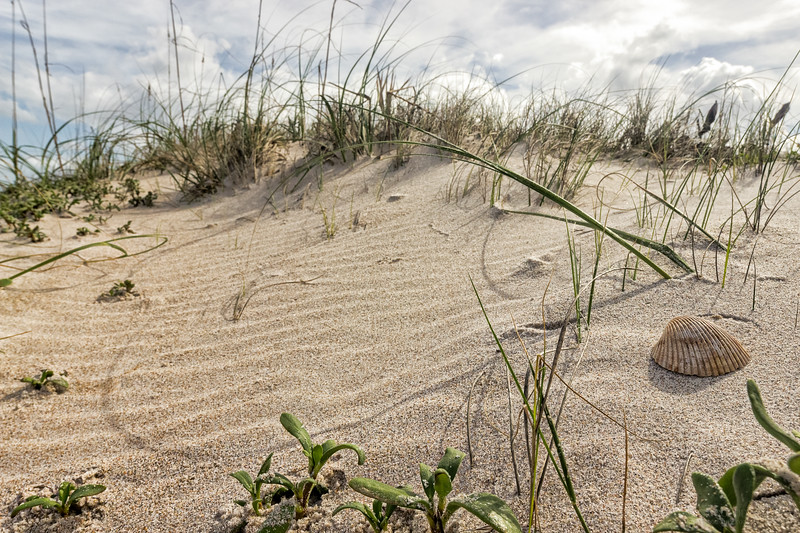 In the dunes along Canaveral National Seashore