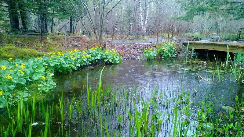 at the Wild Gardens of Acadia on a rainy spring day