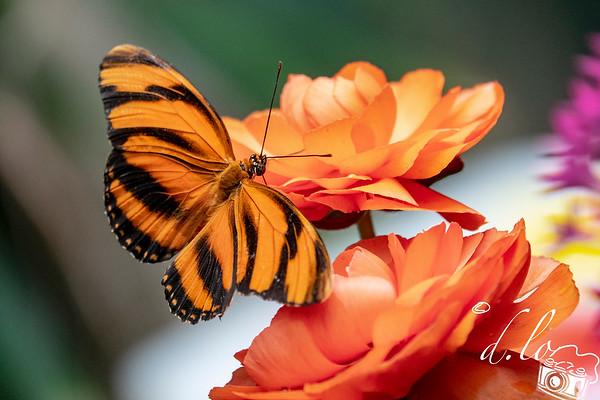 Butterfly Jungle at Safari Park - 3/23/2019