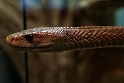 2014 Reptile Zoo