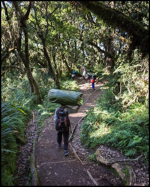 Last leg of the trek towards Mweka Gate
