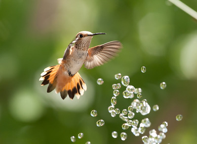 Hummers and water