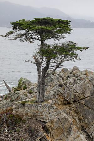 20190708 Day in Monterey Bay