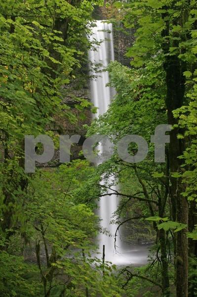 Silver Falls 4382.jpg