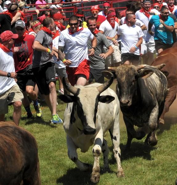 the-great-bull-run-art-glenn-06_44_20141019_1186512855.jpg