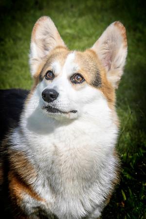 Marys Dog
