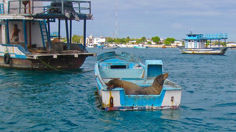 SEA LION IN BOAT.jpg