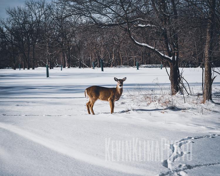 DeerIrvingParkjan2019-3.jpg