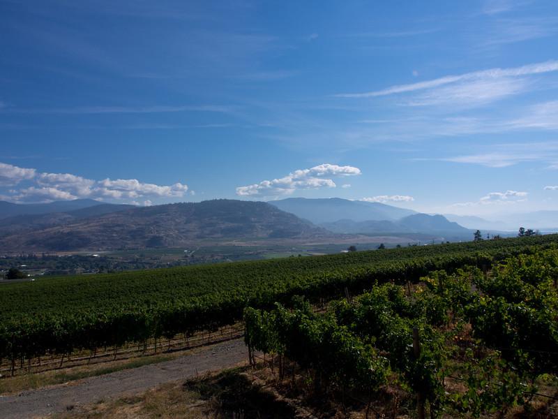 hills vineyard.jpg