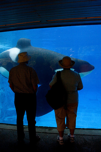 Darcie's Mom and Dad looking at Shamu