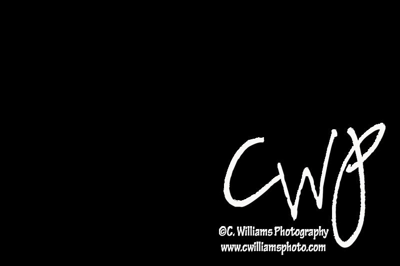 CWP W WM 6x4.png