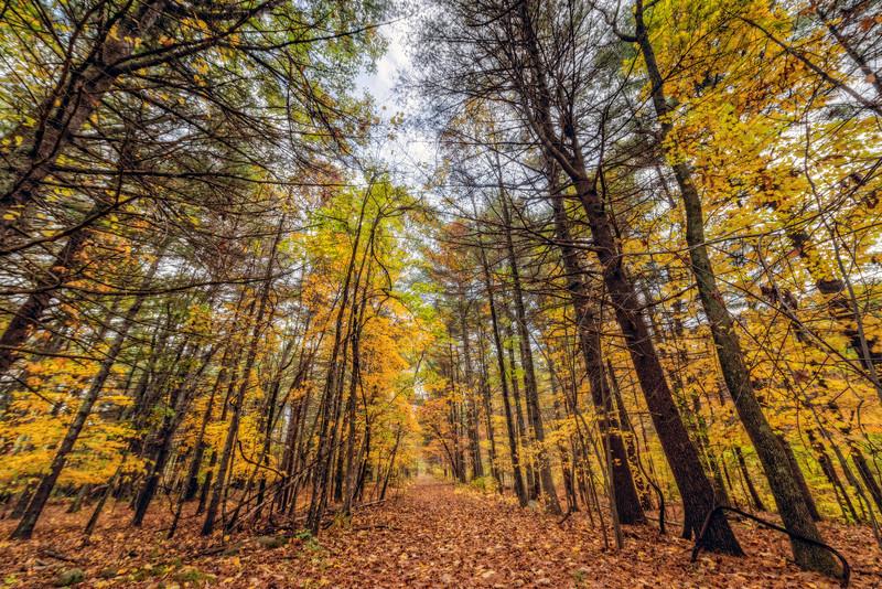 RT Woods.jpg